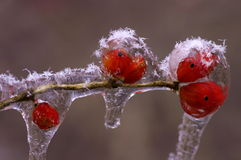 Frutta in ghiaccio immagini stock libere da diritti