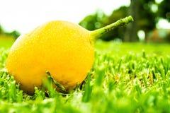 Frutta gialla sul prato fotografia stock libera da diritti