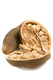 Frutta isolata del baobab Immagine Stock