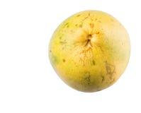 Frutta IV del pomelo Fotografia Stock Libera da Diritti