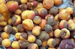 Frutta marcia immagini stock libere da diritti