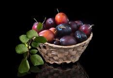 Frutta matura della prugna isolata su fondo nero con la riflessione immagine stock