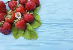 Frutta organica fresca della foglia della fragola che coltiva il raccolto di estate su un fondo di legno blu Fotografia Stock Libera da Diritti