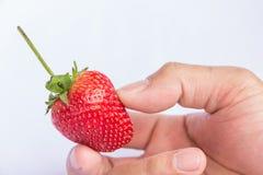 Frutta pulita della fragola rossa fresca Immagini Stock Libere da Diritti