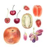 Frutta rassodata dell'acquerello isolata su bianco Fragola della ciliegia dell'uva del kiwi dell'albicocca della pesca Fotografia Stock Libera da Diritti