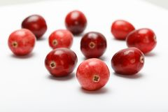 Frutta rossa del mirtillo rosso Fotografie Stock Libere da Diritti