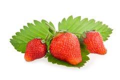 Frutta rossa della fragola con i fogli verdi Fotografia Stock
