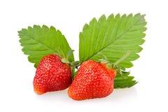 Frutta rossa della fragola con i fogli verdi Fotografia Stock Libera da Diritti