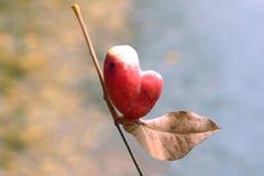 Frutta rossa sotto forma di cuore Immagini Stock