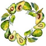 Frutta selvaggia dell'avocado verde esotico nel telaio di stile dell'acquerello royalty illustrazione gratis