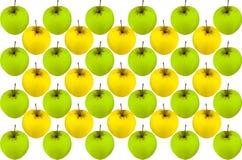Frutta stagionale di verde giallo del modello luminoso dorato stabilito della mela fruttata Immagine Stock