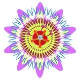 Frutta tropicale blu del fiore di passione Illustrazione di vettore Immagini Stock