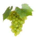 Frutta verde dell'uva con i fogli Fotografia Stock
