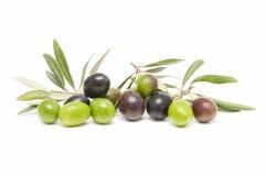 Frutta verde oliva Fotografie Stock Libere da Diritti