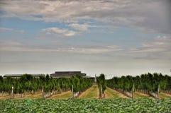 frutteti Agricoltura in Taman Immagini Stock