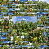 Frutteti del collage delle mele e delle pere Fotografia Stock Libera da Diritti