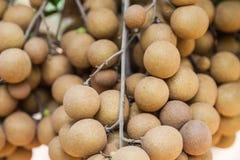 Frutteti del Longan - longan di frutti tropicali Fotografie Stock