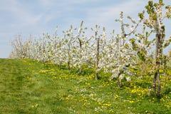 Frutteto Fotografie Stock Libere da Diritti