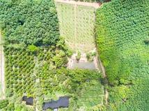 Frutteto degli alberi di durian e della banana e piantagione degli alberi di gomma Fotografia Stock