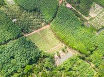 Frutteto degli alberi di durian e della banana e piantagione degli alberi di gomma Fotografia Stock Libera da Diritti