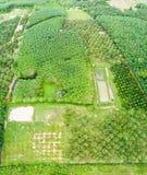 Frutteto degli alberi di Durian e piantagione degli alberi di gomma Immagine Stock