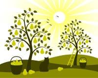 Frutteto dell'albero di pera Immagini Stock Libere da Diritti
