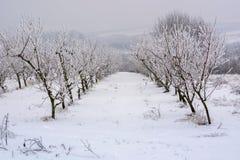 Frutteto della pesca coperto di neve nell'inverno, dof basso immagini stock