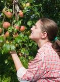 frutteto della ragazza delle mele Fotografia Stock Libera da Diritti