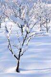 Frutteto di frutta in inverno Immagini Stock Libere da Diritti