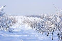 Frutteto di frutta in inverno Fotografia Stock Libera da Diritti