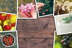 Frutteto e collage della foto di agricoltura Fotografia Stock