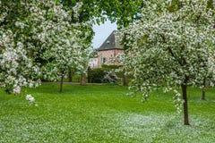 Frutteto olandese con gli alberi sboccianti su una proprietà medievale fotografie stock libere da diritti
