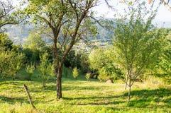 Frutteto sulla montagna bagnata in Serbia Immagine Stock