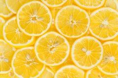 Frutti affettati del limone Immagini Stock Libere da Diritti