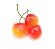 Frutti artificiali assortiti Fotografia Stock