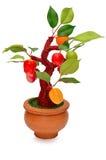 Frutti (artificiali) isolati su fondo bianco Fotografia Stock