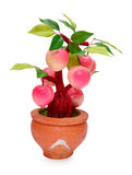 Frutti (artificiali) su fondo bianco Fotografia Stock Libera da Diritti