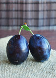 Frutti blu scuri succosi delle prugne in mani Immagine Stock Libera da Diritti