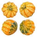 Frutti decorativi della zucca su bianco Fotografie Stock Libere da Diritti