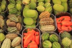 Frutti decorativi di autunno Immagine Stock Libera da Diritti