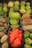 Frutti decorativi di autunno Fotografia Stock