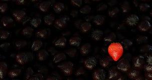 Frutti dei precedenti della foresta fotografia stock