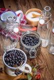 Frutti del chokeberry nero per elaborare fotografia stock libera da diritti