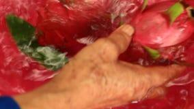 Frutti del drago del lavaggio video d archivio
