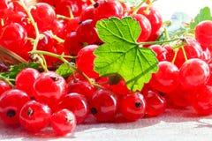 Frutti del ribes rosso Fotografia Stock Libera da Diritti