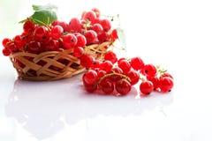 Frutti del ribes rosso Immagine Stock Libera da Diritti