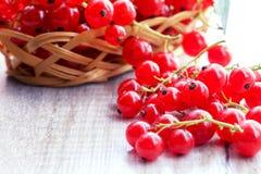 Frutti del ribes rosso Immagine Stock