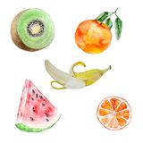 Frutti dell'acquerello messi royalty illustrazione gratis
