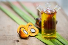 Frutti dell'olio di palma immagini stock