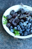 Frutti della foresta Immagini Stock